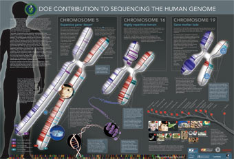 Genomics: The Human Genome and Beyond